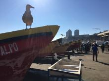A seagull sits on a fishing boat in Chile