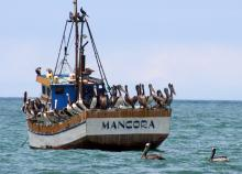 A fishing boat at Mancora
